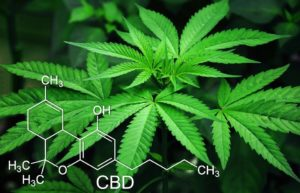 A brief rundown of CBD